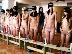 Row of dildos for newbie sorority sisters to suck and fuck